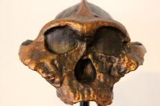 cranium-art-replica-3d-printable